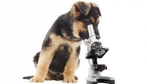Wormbesmetting bij de hond