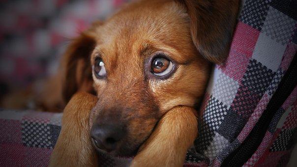 Is jouw hond bang voor harde geluiden?