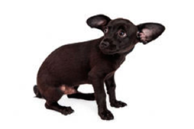 Kleine hondjes, grote mond?