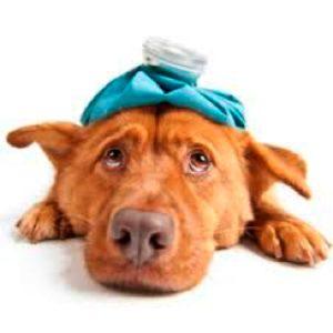 Pijn bij honden