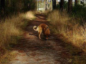 Activiteiten voor jouw hond