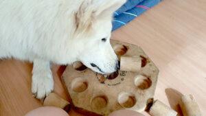 Het effect van verveling op jouw hond