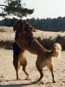 Redenen waarom een hond kan bijten