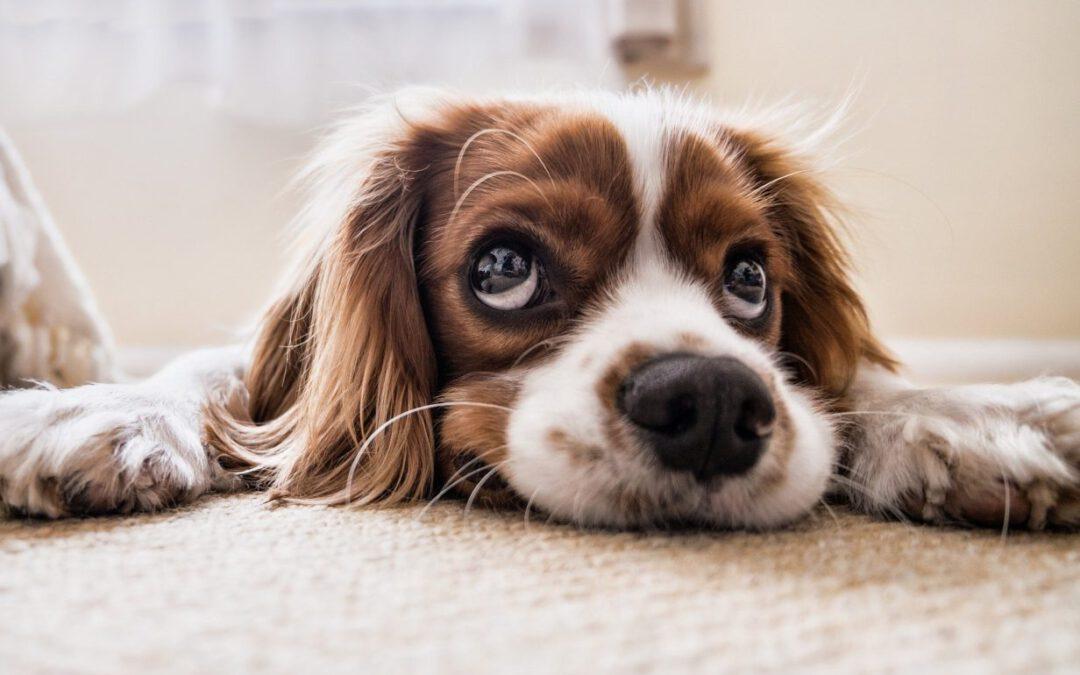 Uw hond wordt senior